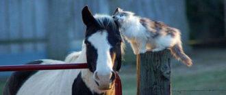 Лечебные свойства животных