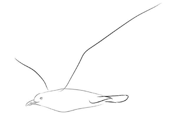 Пташка у польоті