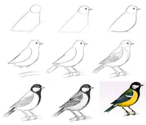 Як намалювати пташку синицю