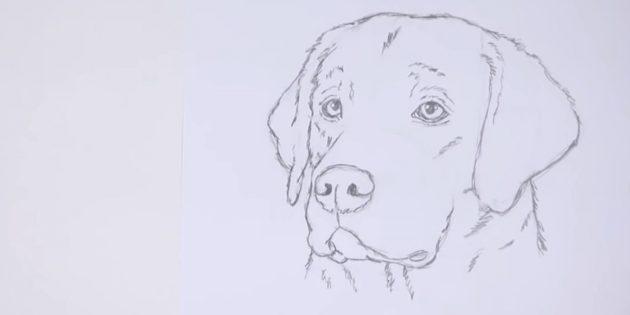 Як намалювати собаку поетапно