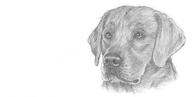 Як намалювати собаку