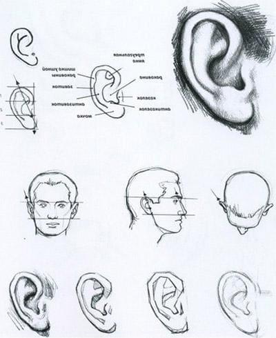 Лице людини, вухо
