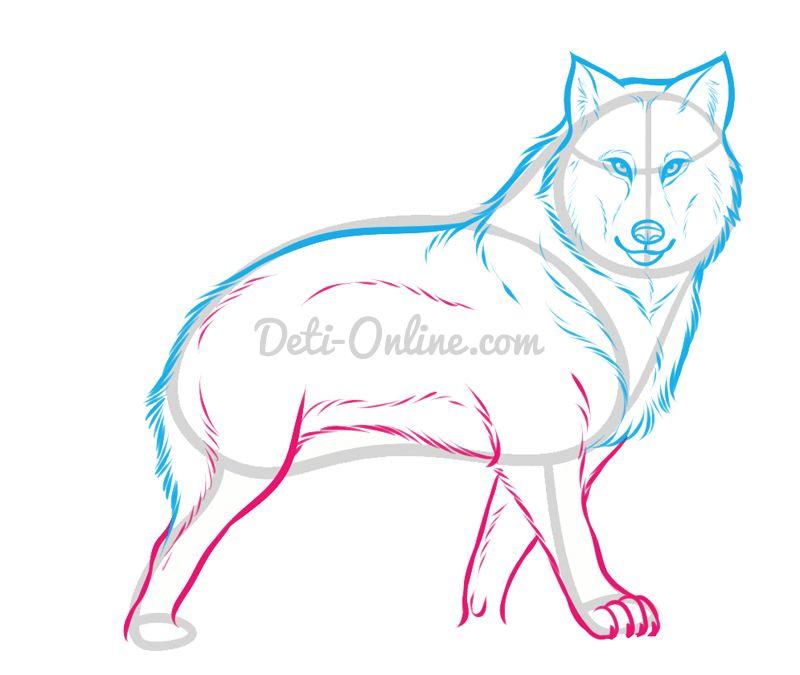 Як намалювати вовка поетапно