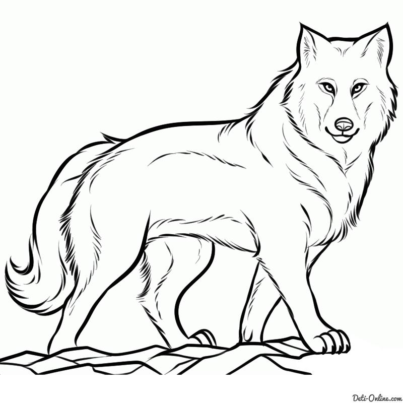 Як намалювати вовка