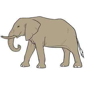 Як намалювати слона