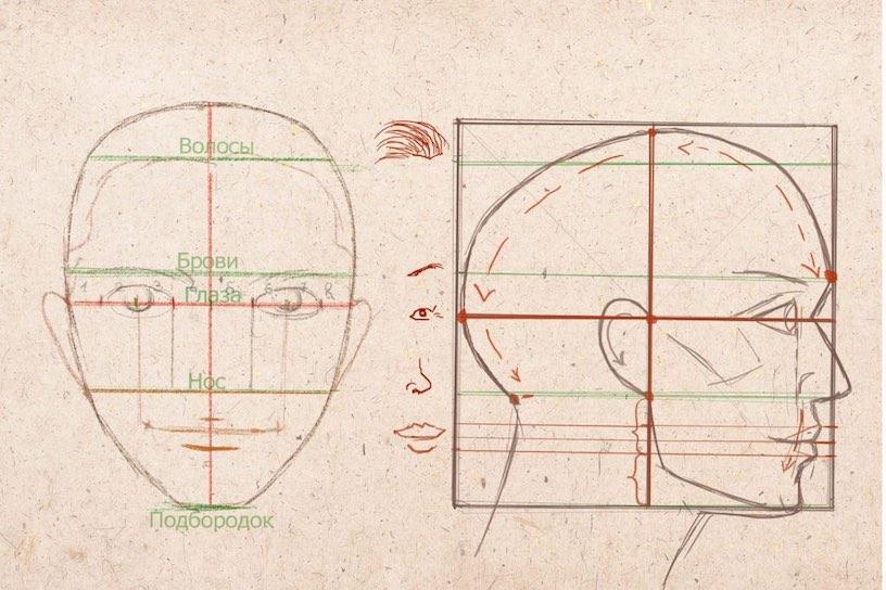 Як намалювати лице людини в профіль