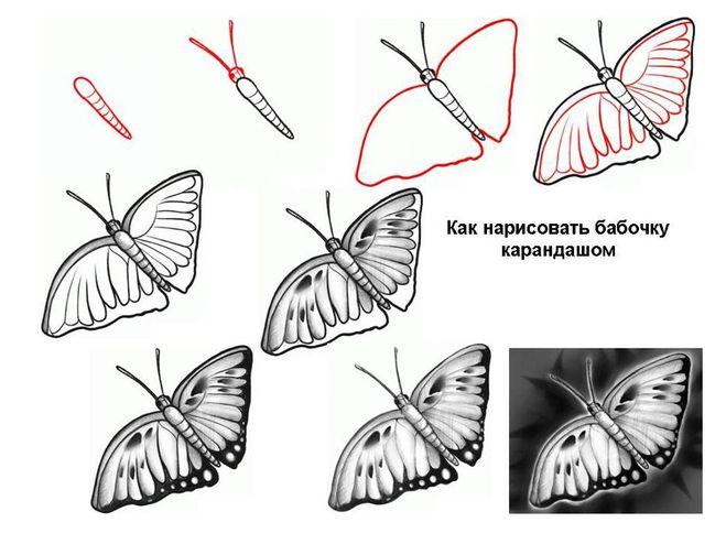 Як намалювати метелика адмірал