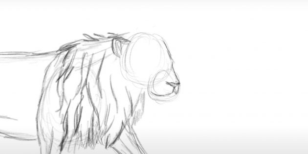 Малюємо лева поетапно