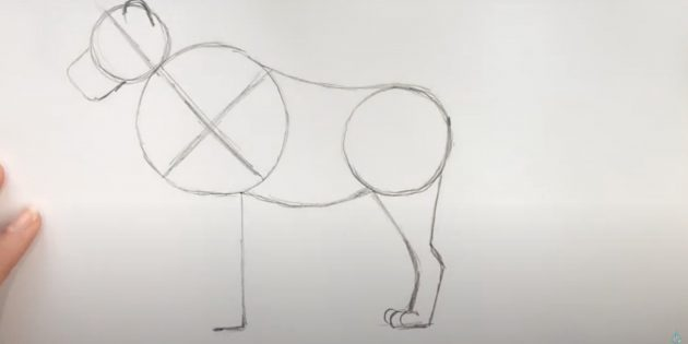 Як намалювати лева