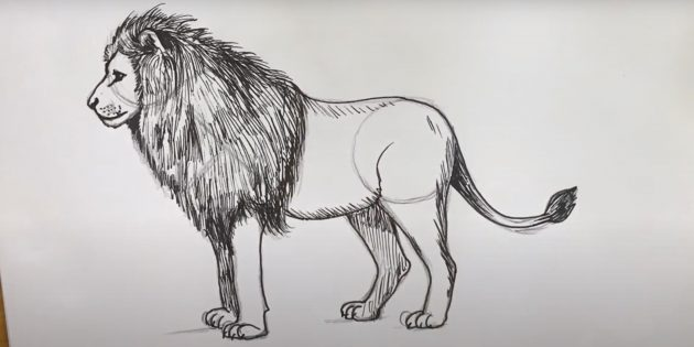 Малюнок лева олівцем