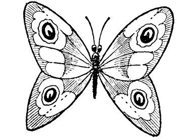 Малюємо метелика