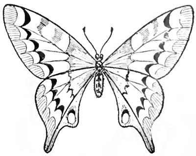 Як намалювати метелика поетапно