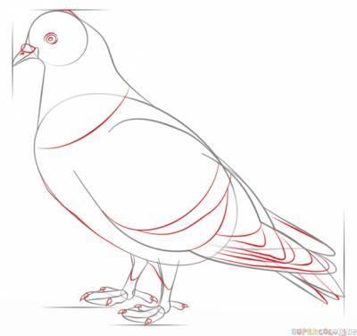 Малюємо голуба