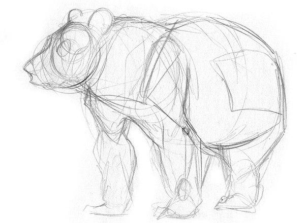 Малюємо ведмедя поетапно