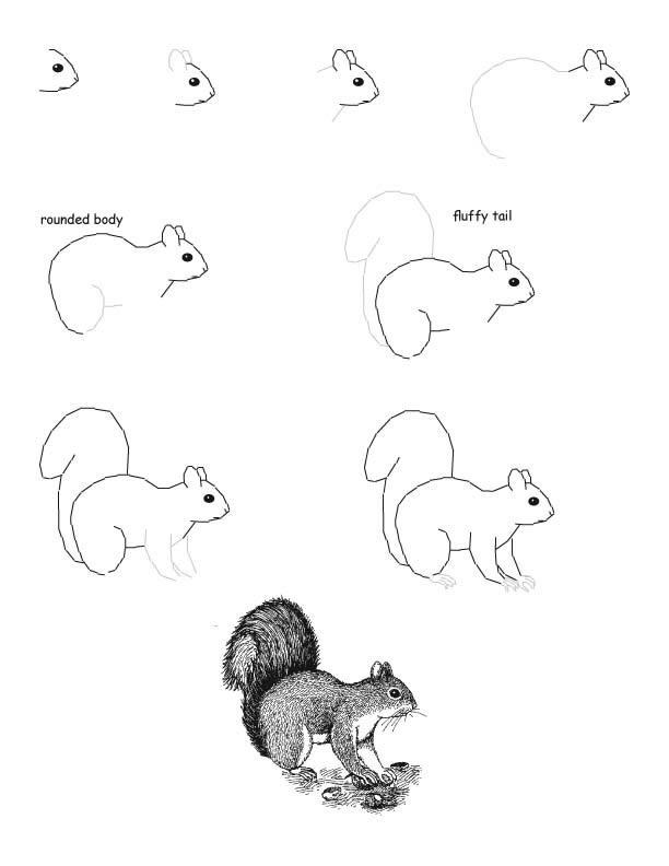 Малюємо білку легко