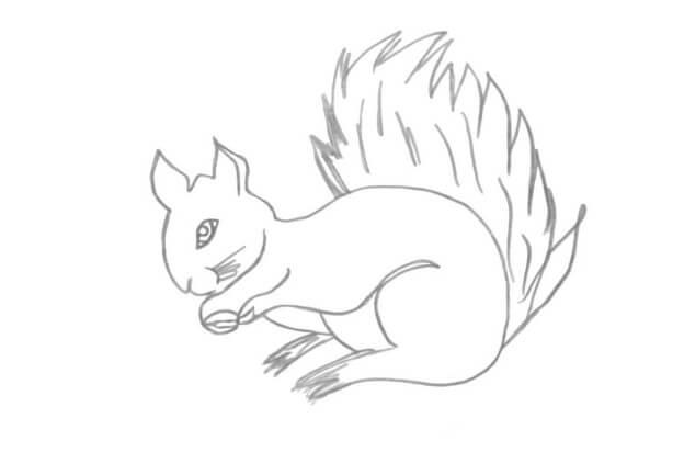 Малюнок білка