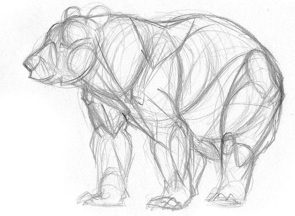 Як намалювати ведмедя поетапно