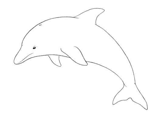 Красивий дельфін