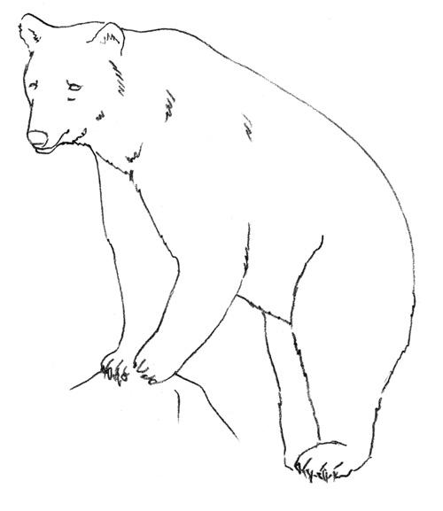 Малюємо ведмедя