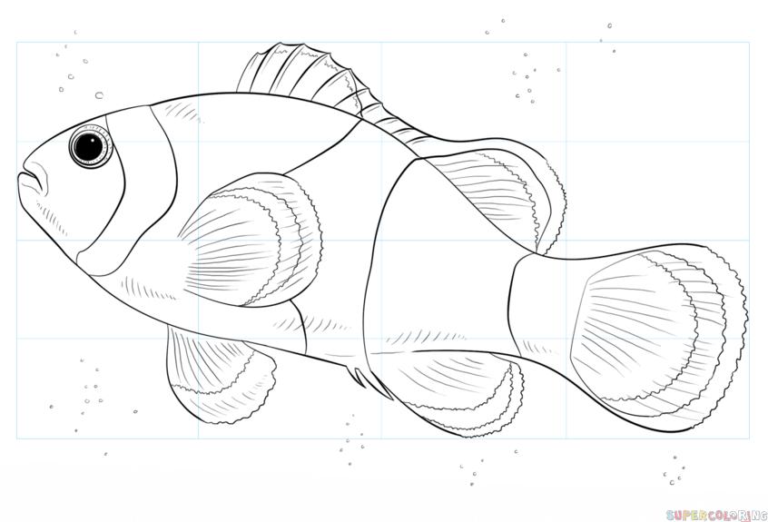 Як намалювати рибу клоуна