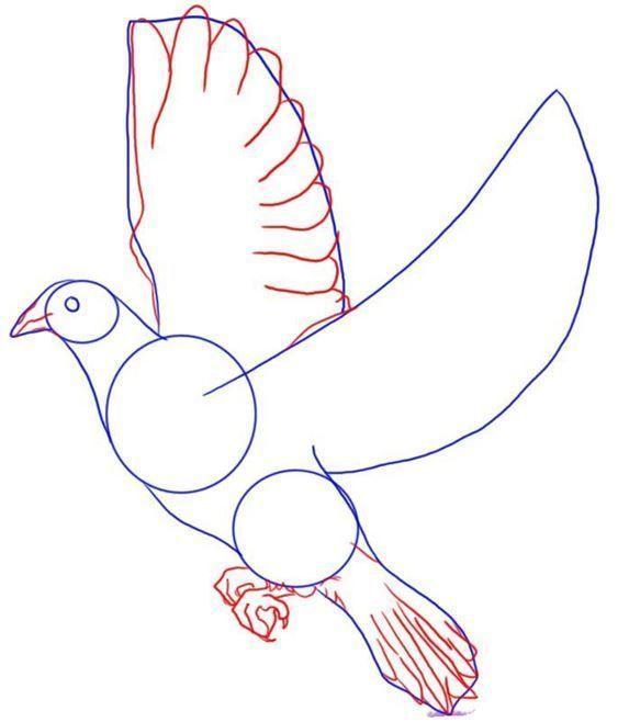 Як намалювати голуба