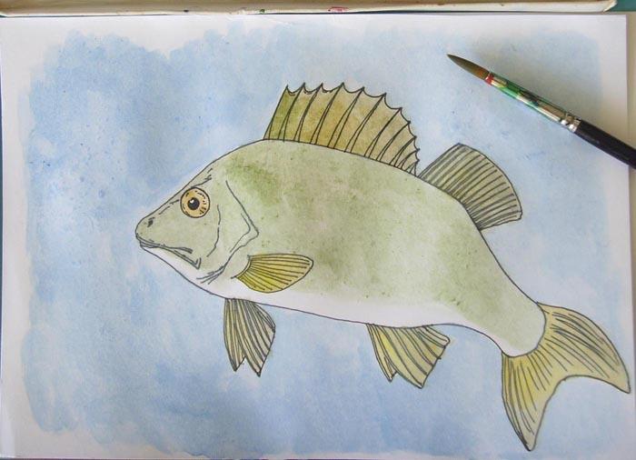 Як намалювати рибу окунь