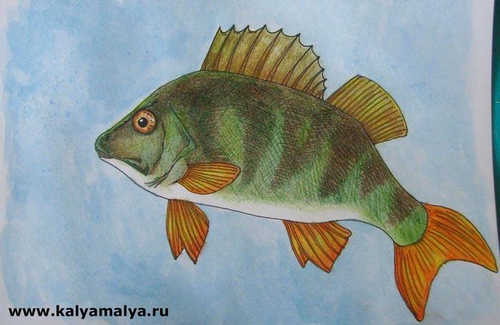 Як намалювати рибу окуня