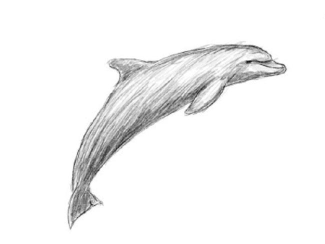 Малюнок дельфіна