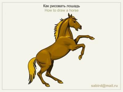 Як намалювати коня на дибах
