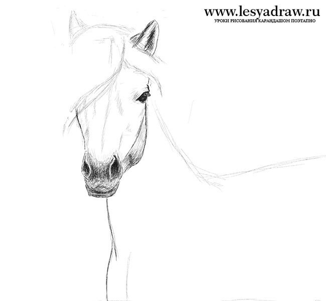 Як намалювати коня олівцем