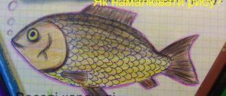 Як намалювати рибу