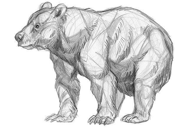 Як намалювати ведмедя