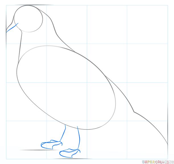 Як намалювати голуба поетапно