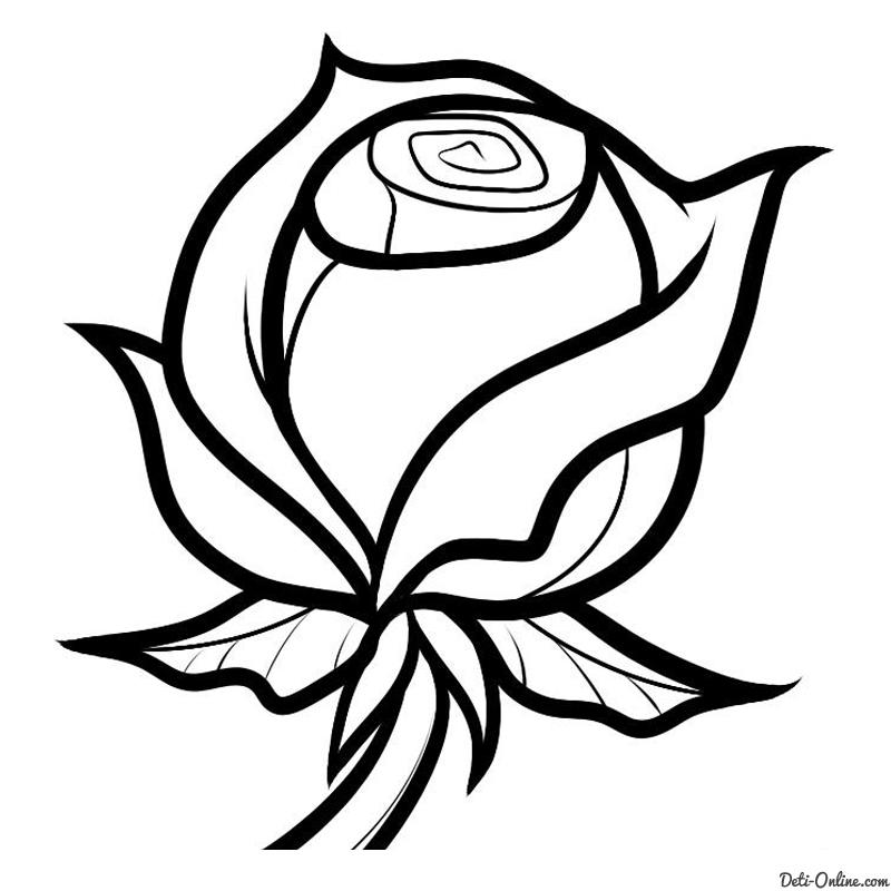 Як намалювати розу поетапно