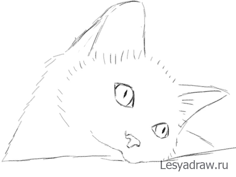 Малюємо милого котика