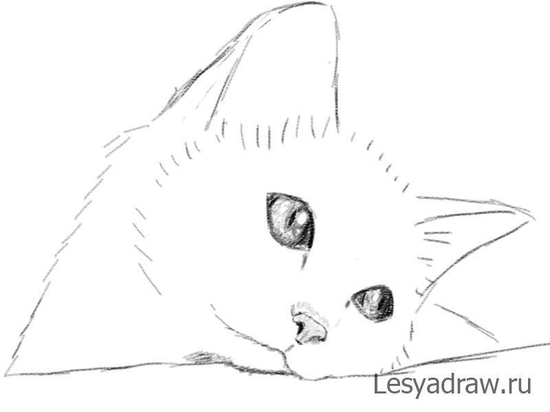 Милий котик малюнок