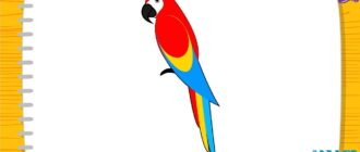Як намалювати попугая