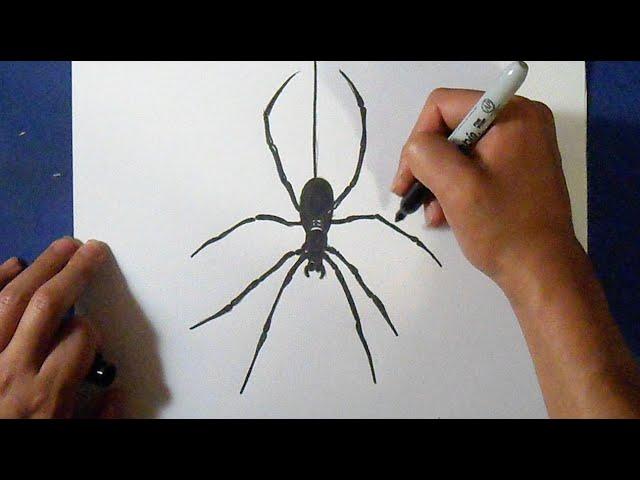 Як намалювати павука